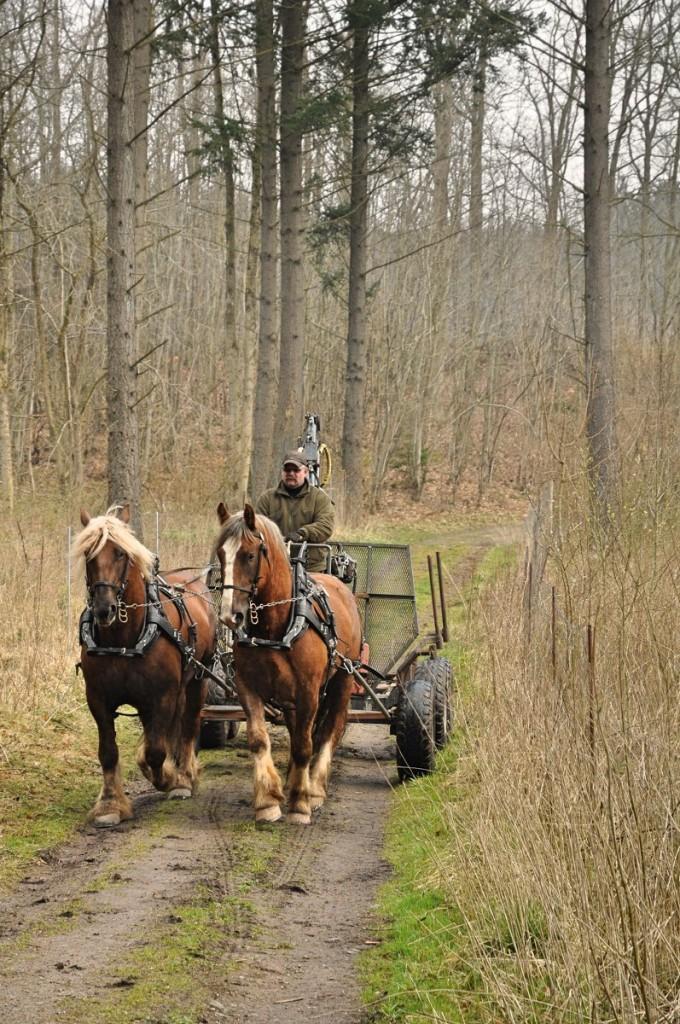 Ortved udkørsel med hest 4-12 077_797x1200